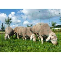 Síť pro elektrické ohradníky na ovce Ovinet 108 cm, 50 m, 1 hrot, zelená