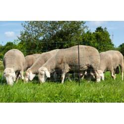 Síť pro elektrické ohradníky na ovce Ovinet 90 cm, 50 m, 1 hrot, zelená