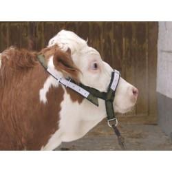 Ohlávka pro krávy a mladé býčky